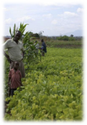 Annuals for food and soil quality- soybean and groundnuts