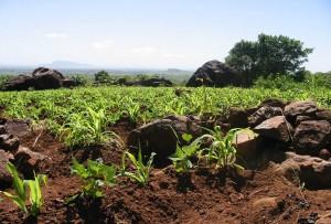 Soil Quality, Soil Fertility & Low Productivity