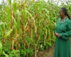 Nature Plants features Malawi agricultural research